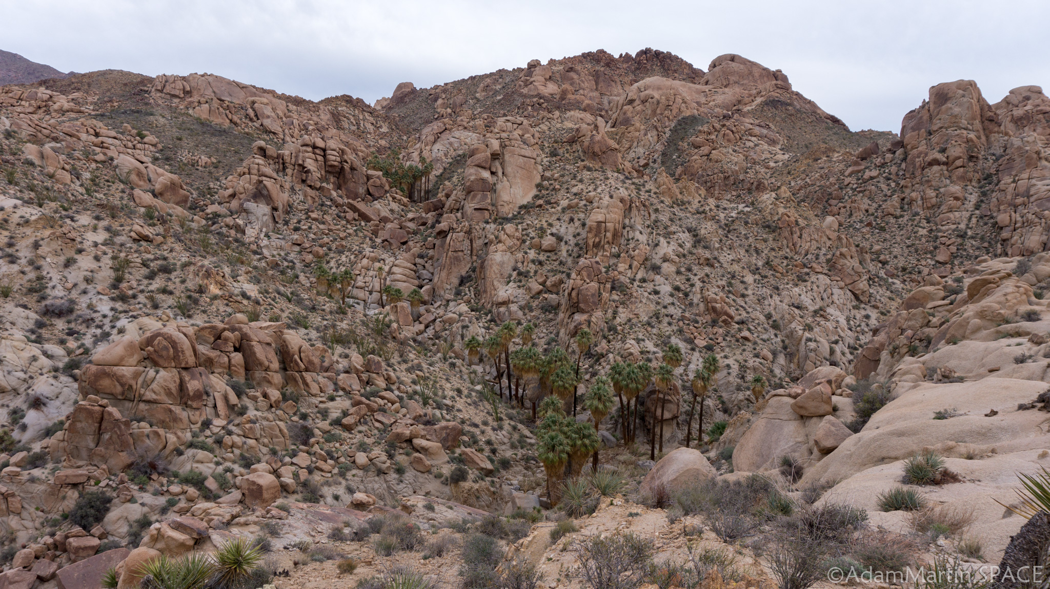 Joshua Tree – Lost Palms Oasis