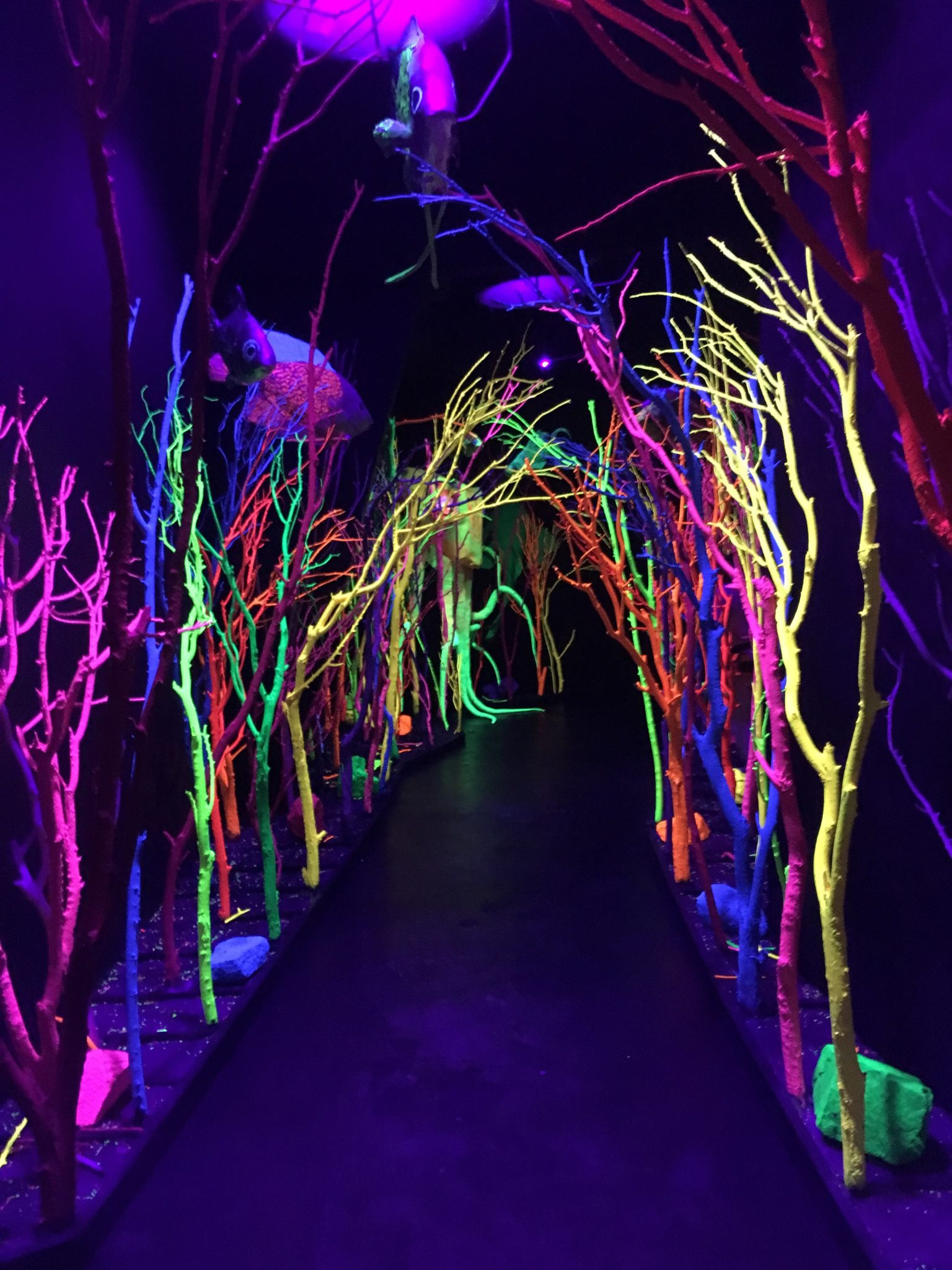 2016 Road Trip – Meow Wolf